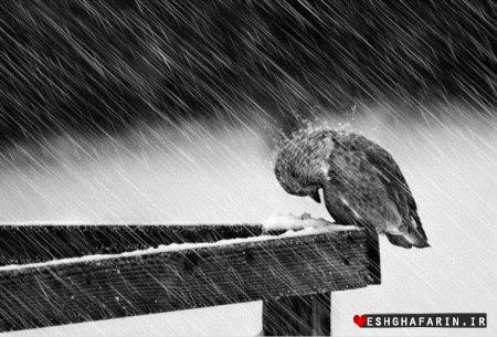 تنهایی هیچ وقت تمام نمی شود
